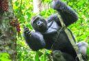 Tourism Journal: Bwindi Impenetrable National Park